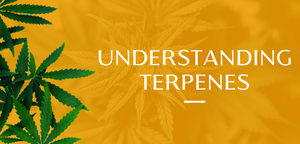 Understanding Common Terpenes