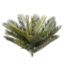 Palm Cycad Bush
