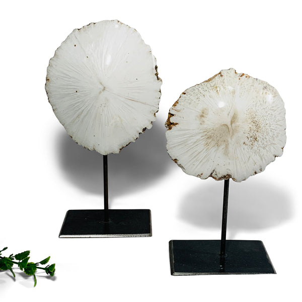 Mounted Scolecite