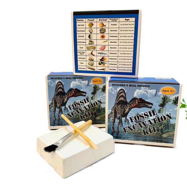 Fossil Excavation Kit