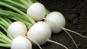 HSHG | Baby Salad Turnip | Fresh One Bunch