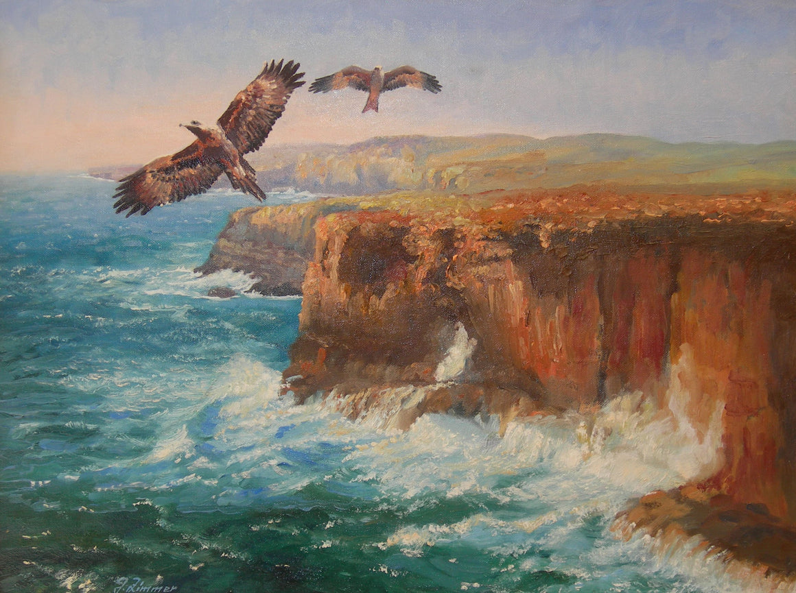 Wedgetailed Eagle and Kite over Port Campbell, Victoria, Australia