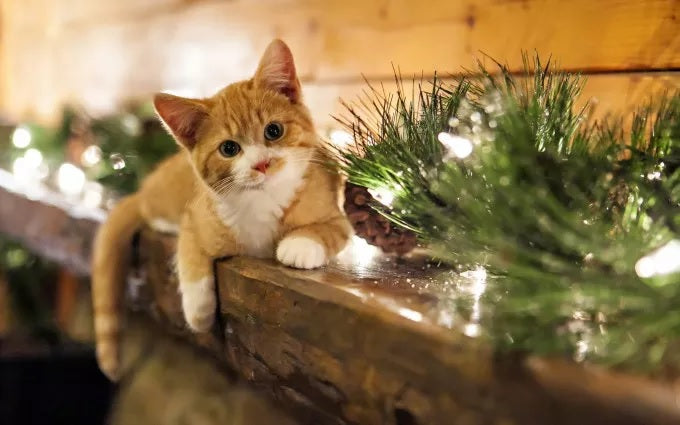13 Cats Who Love Christmas BY CHRISTINA DONNELLY