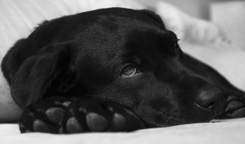 Learn How to Tell When Your Dog Is Sick by JENNA STREGOWSKI, RVT