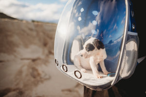 Pet Astronaut Capsule Backpack
