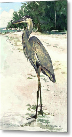 Blue Heron On Shell Beach, Siesta Key - Metal Print
