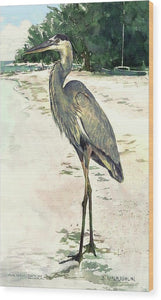 Blue Heron On Shell Beach, Siesta Key - Wood Print