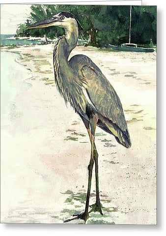 Blue Heron On Shell Beach, Siesta Key - Greeting Card