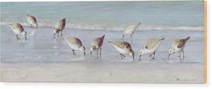 Breakfast On The Beach, Snowy Plover Sandpipers, Siesta Key, Wide-narrow - Wood Print