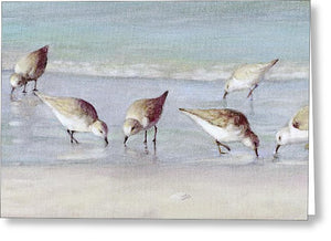 Breakfast On The Beach, Snowy Plover Sandpipers, Siesta Key, Wide-narrow - Greeting Card