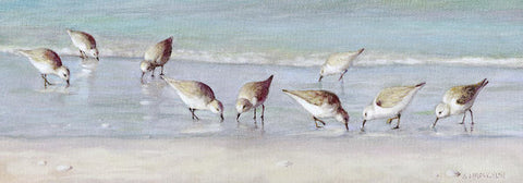 Breakfast On The Beach, Snowy Plover Sandpipers, Siesta Key, Wide-narrow - Art Print