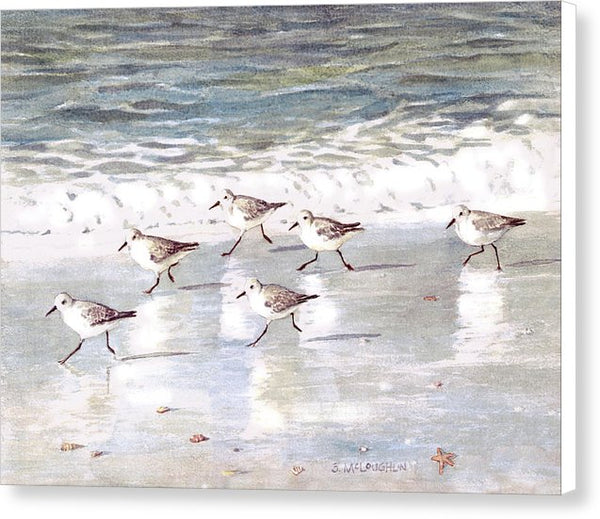 Snowy Plover Sandpipers On Siesta Key Beach - Canvas Print