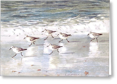 Snowy Plover Sandpipers On Siesta Key Beach - Greeting Card