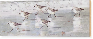 Snowy Plover Sandpipers On Siesta Key Beach, Wide-narrow - Wood Print