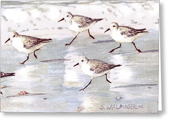 Snowy Plover Sandpipers On Siesta Key Beach, Wide-narrow - Greeting Card