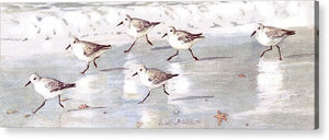 Snowy Plover Sandpipers On Siesta Key Beach, Wide-narrow - Acrylic Print