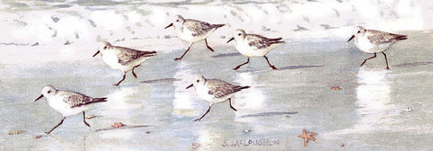 Snowy Plover Sandpipers On Siesta Key Beach, Wide-narrow - Art Print