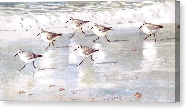 Snowy Plover Sandpipers On Siesta Key Public Beach - Wide - Canvas Print
