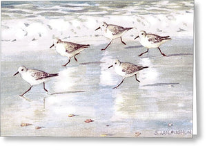 Snowy Plover Sandpipers On Siesta Key Public Beach - Wide - Greeting Card