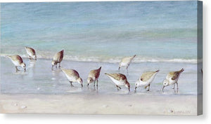 Breakfast On The Beach, Snowy Plover Sandpipers, Siesta Key - Canvas Print