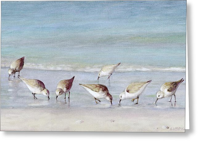 Breakfast On The Beach, Snowy Plover Sandpipers, Siesta Key - Greeting Card