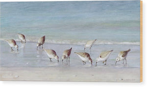 Breakfast On The Beach, Snowy Plover Sandpipers, Siesta Key - Wood Print