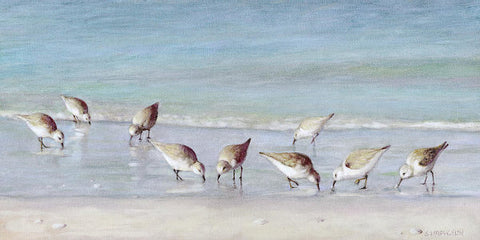 Breakfast On The Beach, Snowy Plover Sandpipers, Siesta Key - Art Print