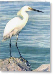 Snowy White Egret On Siesta Key - Greeting Card
