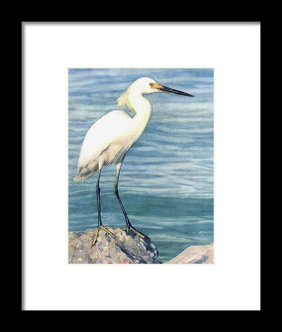 Snowy White Egret On Siesta Key - Framed Print