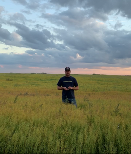 Thinking of Growing Camelina? Have a look: