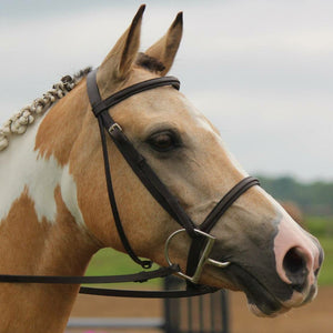 Camelina oil can help reduce allergy-induced skin problems in horses