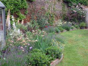 The Garden of William Morris at Kelmscott House