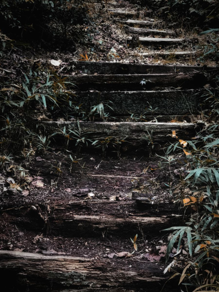 Forest steps at Kiyomizu temple in Kyoto, Japan (2019) - Fine Art Photography by Tatiana Kuzyk