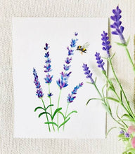 Lavender Botanical Illustration Prints