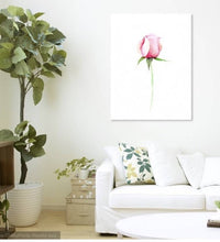 Rose Botanical Illustration, Small bloom Prints