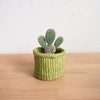 Storage Basket: Prickly Pear