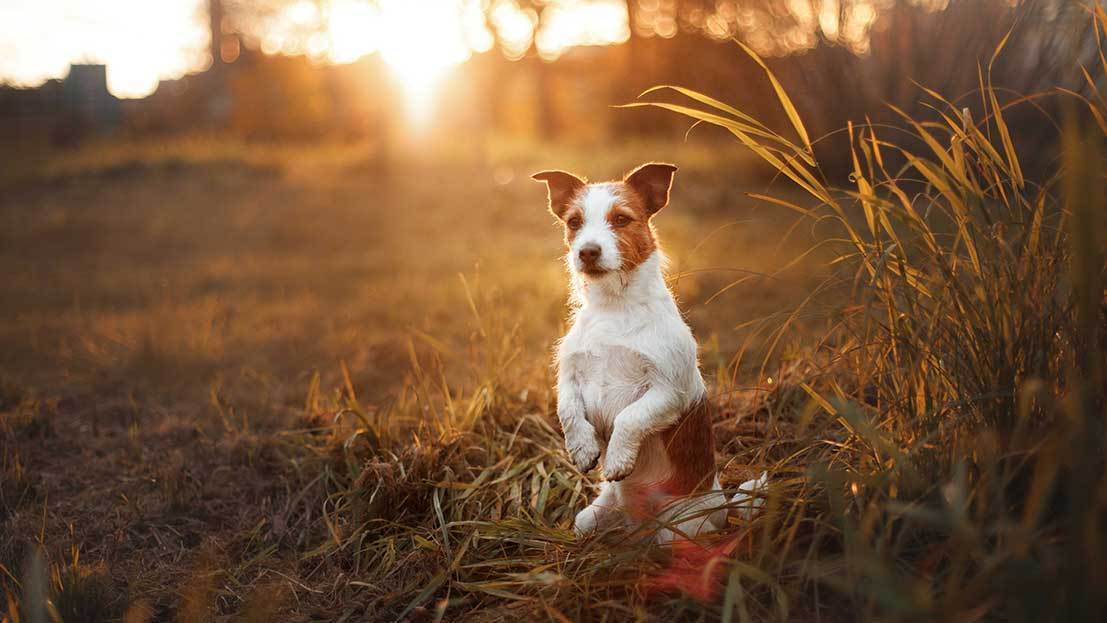 Best Natural Dog Food for a Puppy