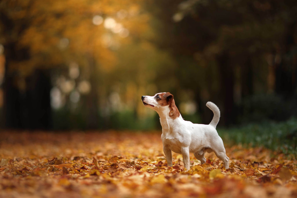 Dog Friendly Holiday's Around The UK