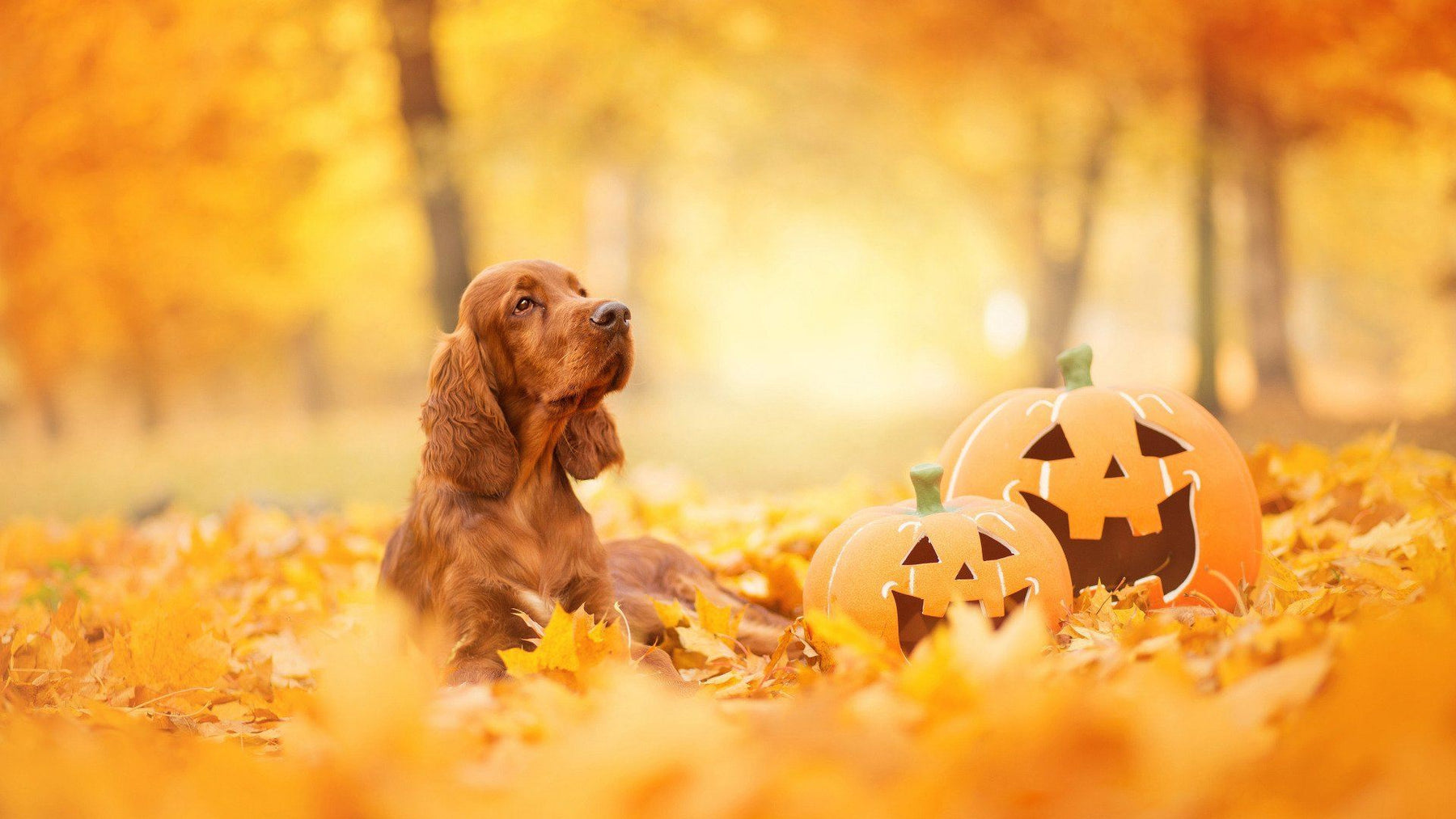 Health Benefits of Pumpkin for Dogs