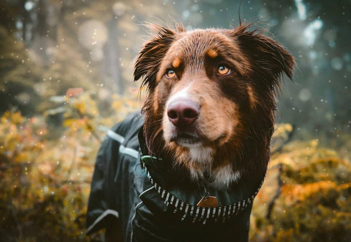 Must Have Autumn Essentials for Dogs