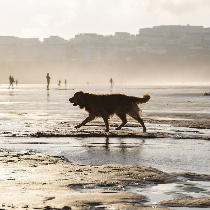 Our Best Dog Friendly Beaches in Cornwall