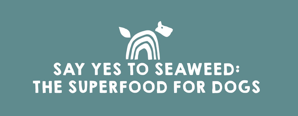 Say Yes to Seaweed: The Superfood for Dogs