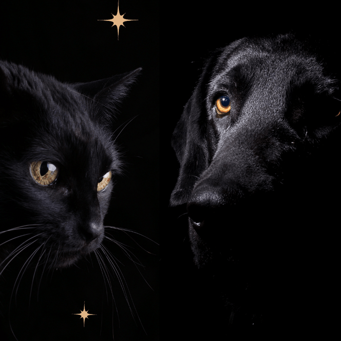 The Magic of Black Cats & Dogs