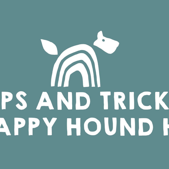 Tips & Tricks for a Happy Hound Holiday