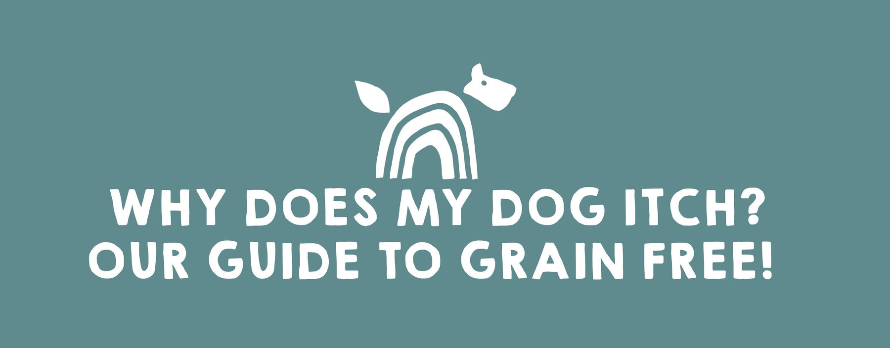 Why Does My Dog Itch? Our guide to Grain Free!