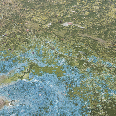 Blue green algae on surface of a pond