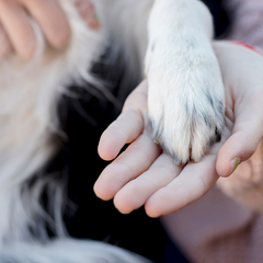 Dogs paw resting on human hand