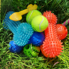 Selection of dog toys in grass