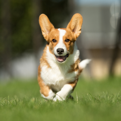 Small dog having a good time on a field