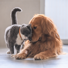 A dog and a cat being friendly with one another